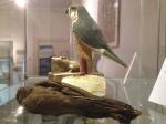 shrewsbury museum 074