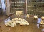 Bonn Egyptian Museum (140)