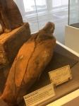 Bonn Egyptian Museum (243)
