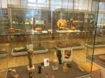 Bonn Egyptian Museum (301)